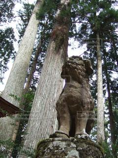 杉の写真・画像素材[206659]