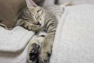 寝る子は育つの写真・画像素材[4655004]