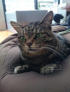 猫の写真・画像素材[319111]