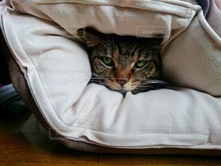 猫の写真・画像素材[319112]