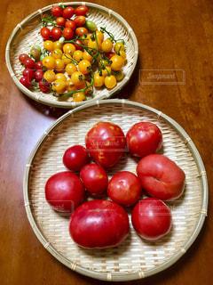 収穫したトマトの写真・画像素材[2462002]
