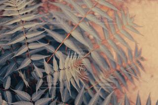 ビンテージ調の葉っぱの写真・画像素材[4813808]