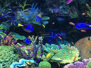 魚の写真・画像素材[206606]