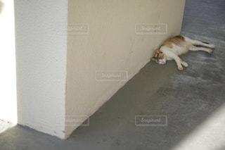 猫の写真・画像素材[210354]