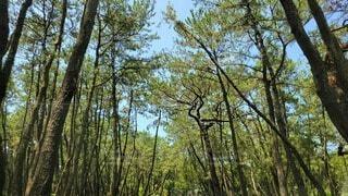 虹ノ松原の写真・画像素材[4687979]