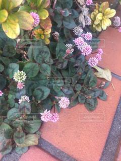 近くの花のアップの写真・画像素材[710506]