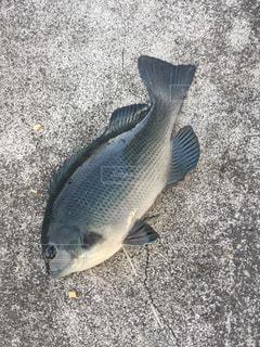 近くに魚のアップの写真・画像素材[718999]