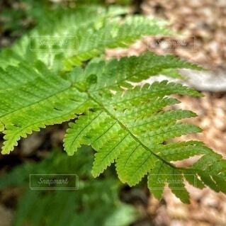 緑の植物のクローズアップの写真・画像素材[4652896]