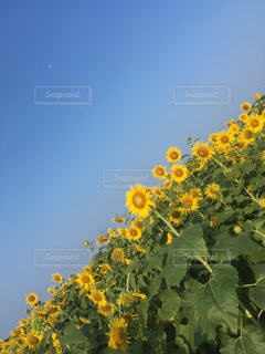 自然の写真・画像素材[207106]