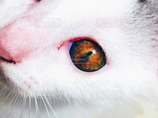 猫が好きの写真・画像素材[206758]