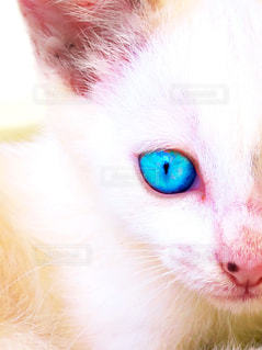 猫が好きの写真・画像素材[206759]