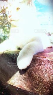猫が好きの写真・画像素材[214767]