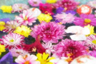 【行田花手水week】行田市の花手水の写真・画像素材[4654755]