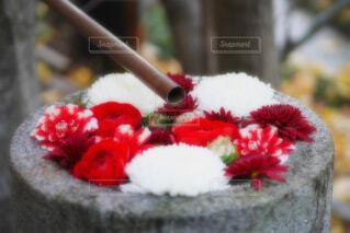 【行田花手水week】行田八幡神社の花手水の写真・画像素材[4719798]