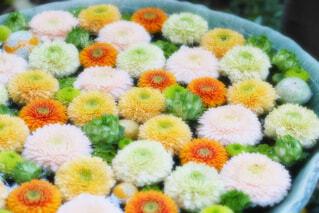 【行田花手水week】行田八幡神社の花手水の写真・画像素材[4723455]