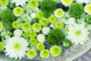 【行田花手水week】行田八幡神社の花手水の写真・画像素材[4725903]