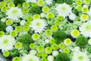 【行田花手水week】行田八幡神社の花手水の写真・画像素材[4725901]