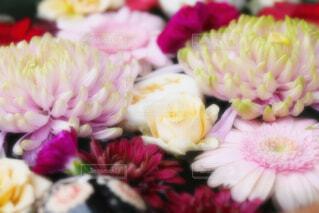 【行田花手水week】行田市の花手水の写真・画像素材[4743802]