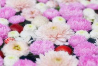 【行田花手水week】行田八幡神社の花手水の写真・画像素材[4752151]
