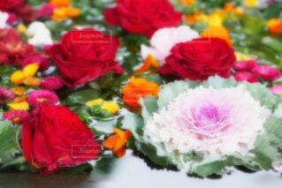 【行田花手水week】前玉神社の花手水の写真・画像素材[4771093]