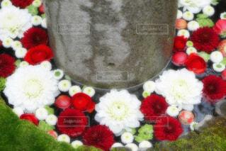 【行田花手水week】行田八幡神社の花手水の写真・画像素材[4896397]