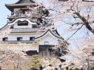 桜の季節とお城の写真・画像素材[212873]