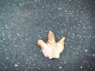 葉っぱの写真・画像素材[213570]