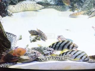 魚 - No.214260