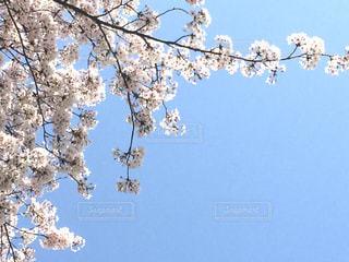 空の写真・画像素材[1096637]