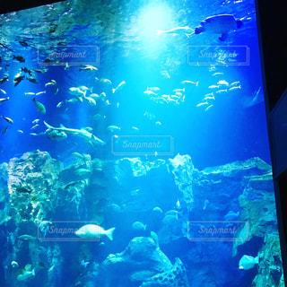水族館の写真・画像素材[635589]