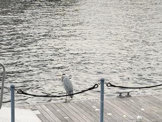 水の体の隣のドックに座っている鳥の写真・画像素材[4653633]