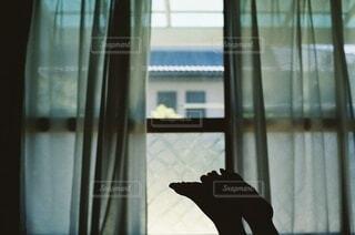 窓辺での写真・画像素材[4656237]