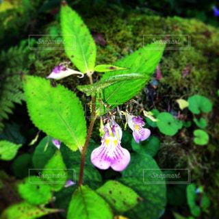自然の写真・画像素材[215994]