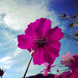 自然の写真・画像素材[215995]