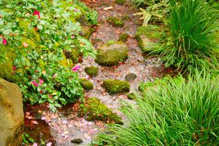 庭の写真・画像素材[236639]