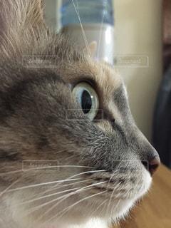 猫の写真・画像素材[208367]