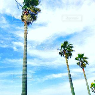 空の写真・画像素材[534000]