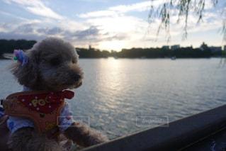 アイドル犬の写真・画像素材[756511]