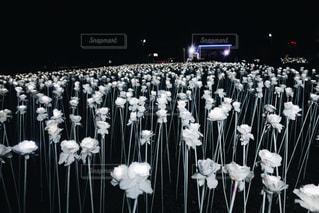 10000本の薔薇の写真・画像素材[1171575]