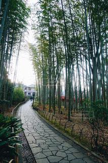 修善寺の竹林の小径の写真・画像素材[1757014]