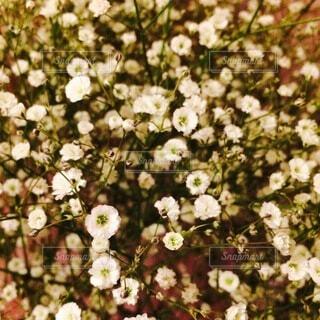 花のクローズアップの写真・画像素材[4683303]