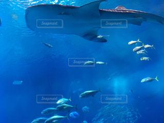 水面下を泳ぐ魚たち - No.848426