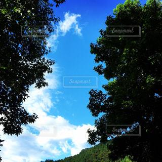 自然の写真・画像素材[207221]
