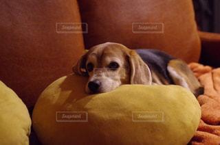 犬の写真・画像素材[208983]