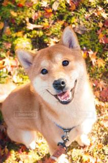 犬の写真・画像素材[210729]