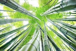 空に伸びる竹林の写真・画像素材[4663917]
