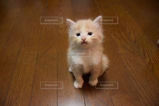 猫の写真・画像素材[207362]