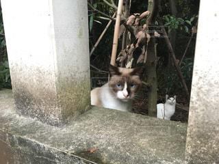 猫の写真・画像素材[228664]