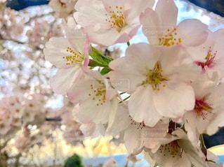 春 - No.422001