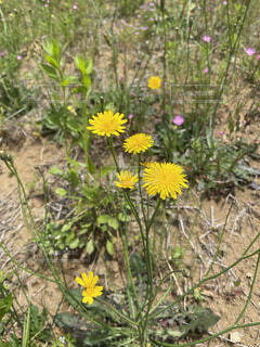 花と夏の写真・画像素材[4665773]